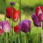 Wiosna, ach to Ty…